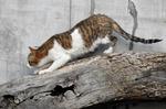 隣の家の猫さん