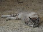 大沢F.家のネコさん