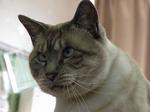 坂本分校のネコ