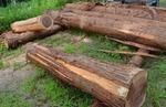 丸太のベンチ作り