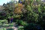 秋の野を行く