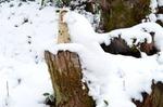 森の妖精を守る