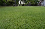 自宅の芝生