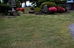 芝生の養生