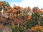 秋です・・・